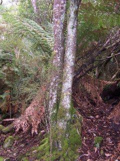 Zuiddam St Columba Falls034